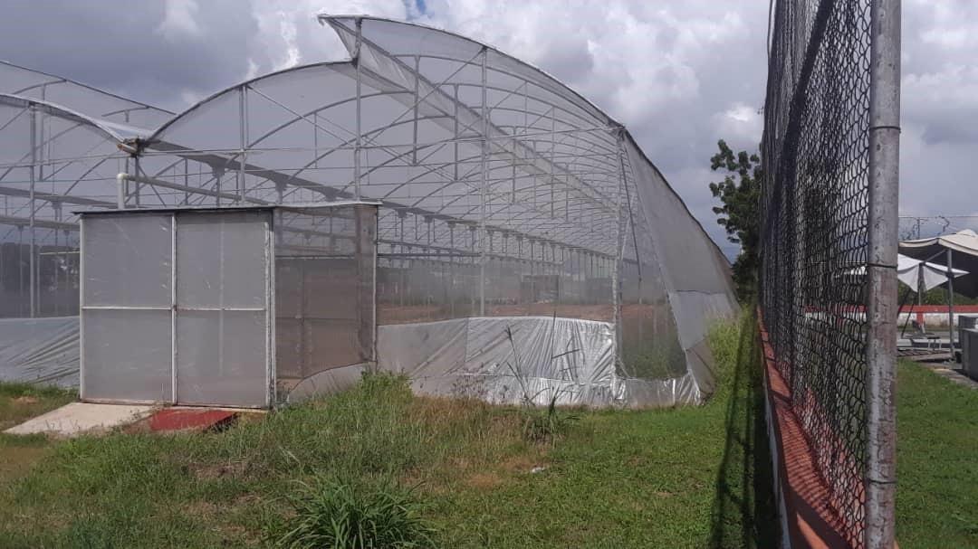Invernaderos con techo curvo a dos aguas con jaula trampa para plagas y patógenos.