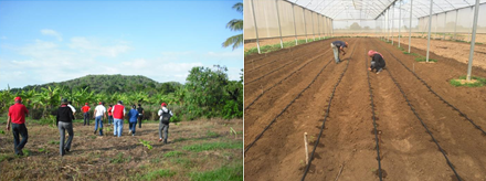 EXPERIENCIA DE INVESTIGACIÓN AGROECOLÓGICA EN SISTEMAS INTEGRADOS DE PRODUCCIÓN AGRÍCOLA INSULARES DE VENEZUELA